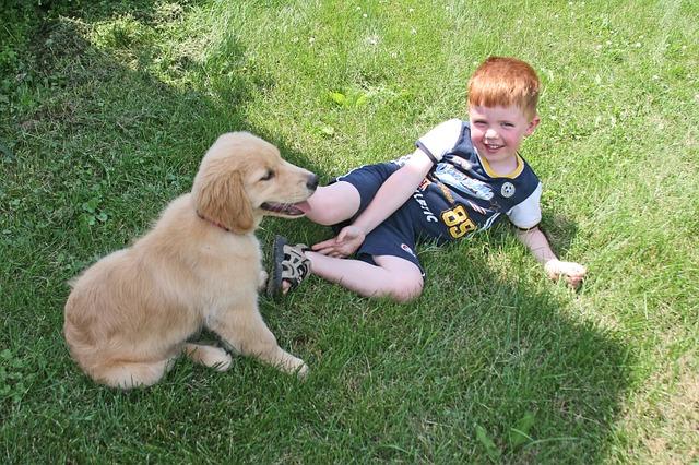 Breeds Dog 4