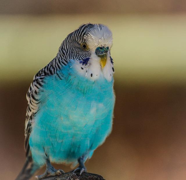Pet Bird 1
