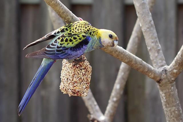Pet Bird 4