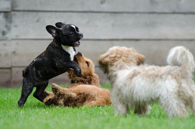 Pets Playing