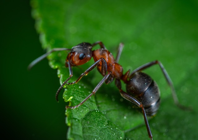 ants 2