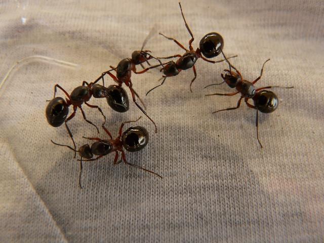 ants 3