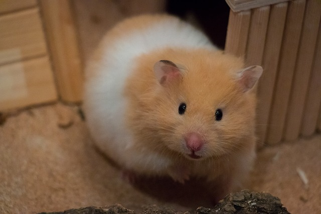hamsters 2