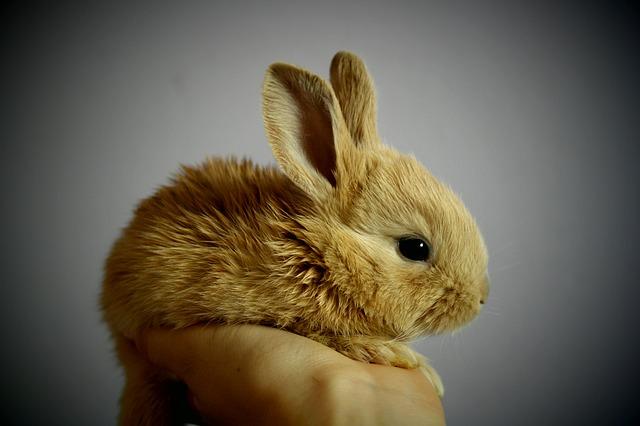 rabbit 1 1