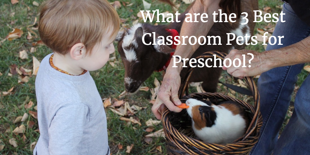 What are the 3 Best Classroom Pets for Preschool