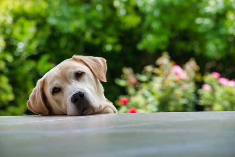 Sad Dog 2
