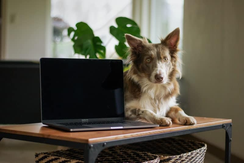 ada serviced dog with computer